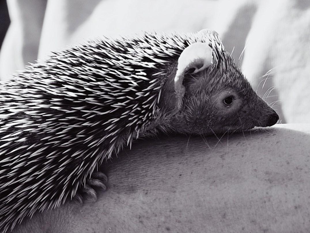 Edinburgh Zoo Nights- Baby Animal
