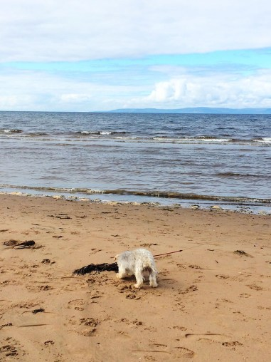 Ananyah- Road Trip Adventures- Bobby sniffing seaweed