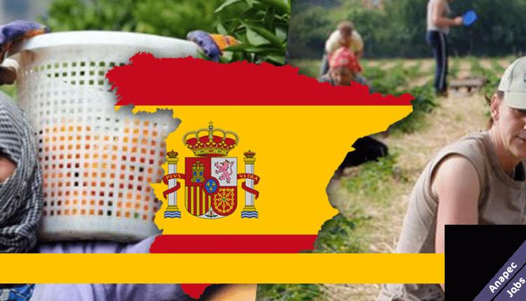 شركة Bonafru في إسبانيا