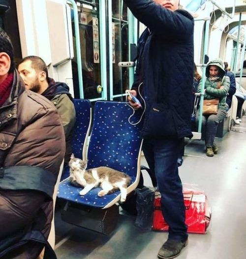 Cat in the Tram