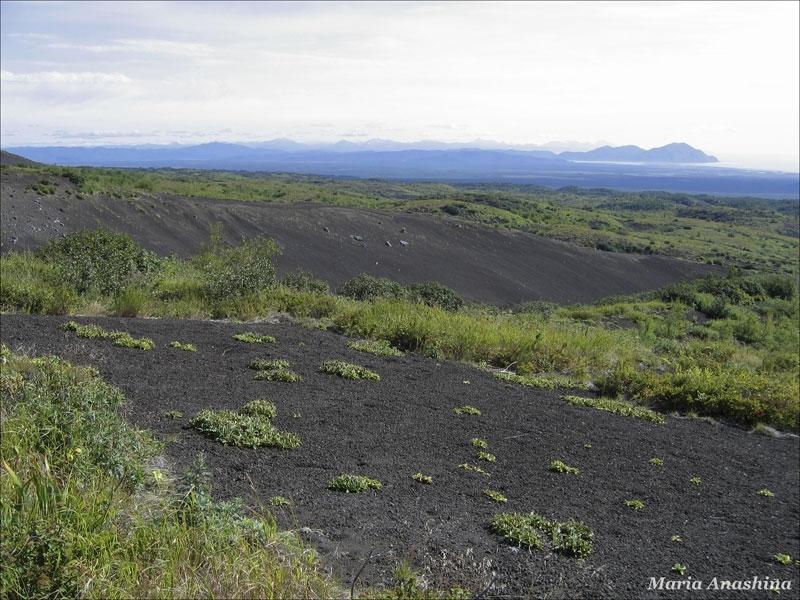 Растительность у подножия Козельского вулкана