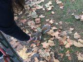 Esquilos... Sempre interesseiros! haha