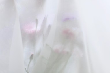 Soft airy flower photography