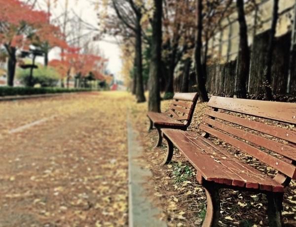 Banc vide à l'automne représentant l'absence et le deuilDeuil