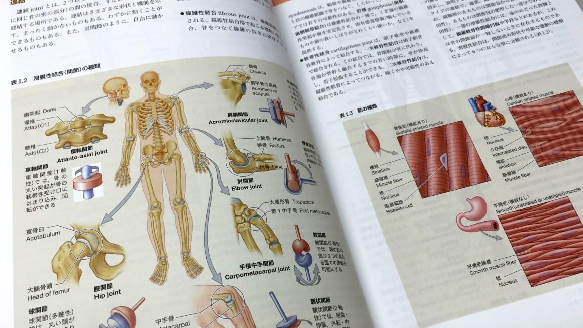 最初の章で系統解剖学が説明される。