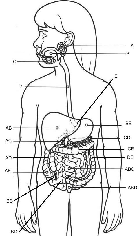 Label – Digestive System (Overall)