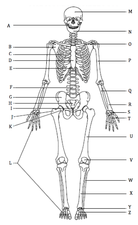 anatomygarciawestern [licensed for non-commercial use only