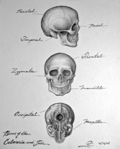 Bones of the Calvary and the Face, graphite on paper, 2012, by Jennifer Ramey