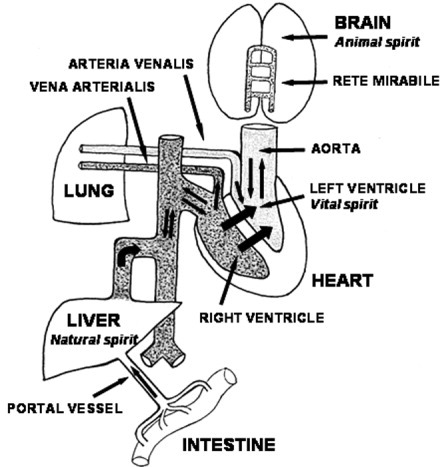Diogenes of Apollonia: A pioneer in vascular anatomy