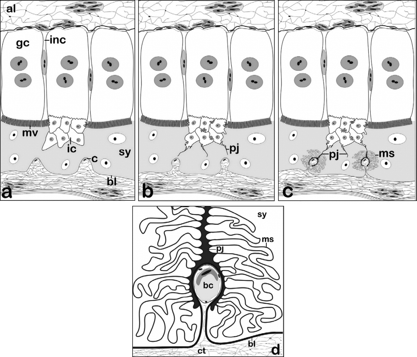 Invasive Cells In The Placentome Of Andean Populations Of