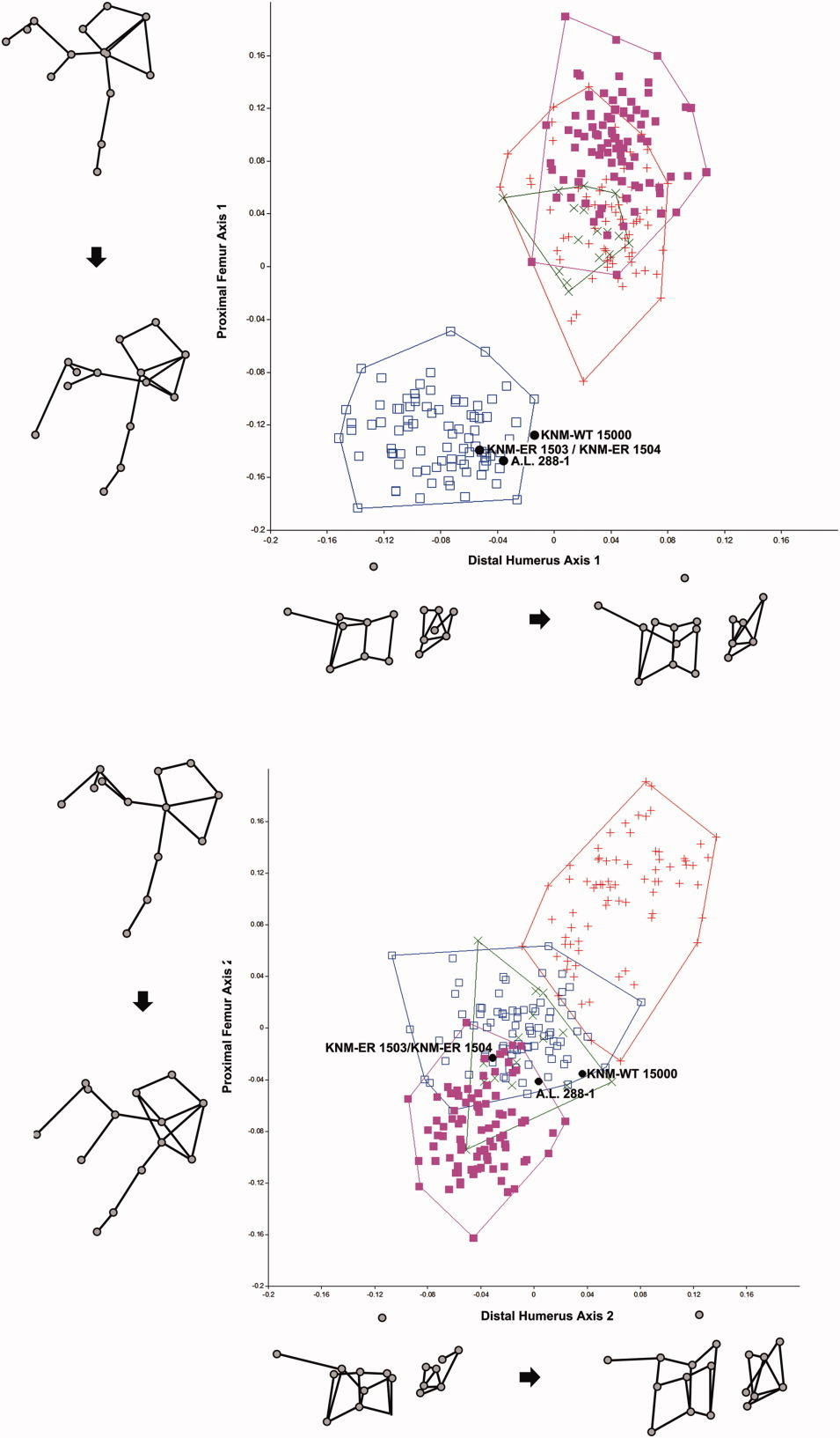 Forelimb to Hindlimb Shape Covariance in Extant Hominoids