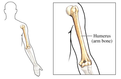 Humerus - parts, side determination, muscles attachment and ...