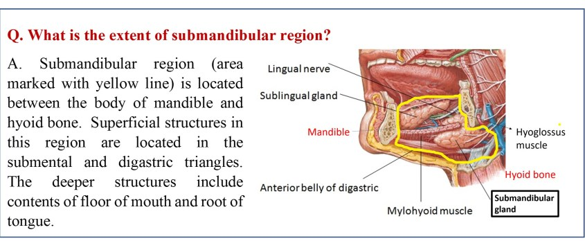 Extent of submandibular region