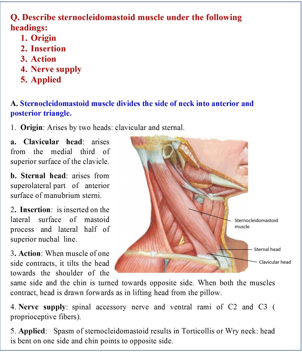 Posterior Triangle of Neck - Anatomy QA