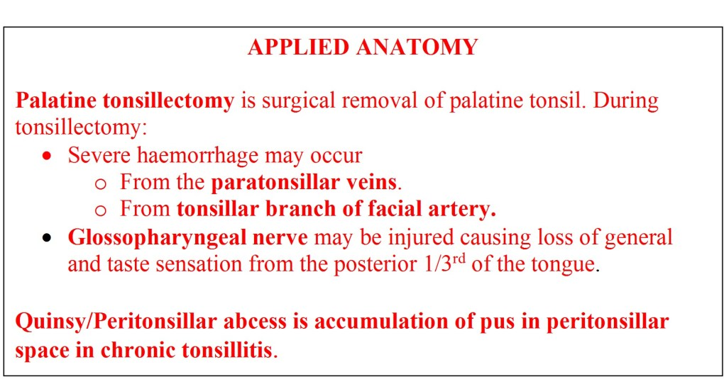 Applied anatomy of palatine tonsil