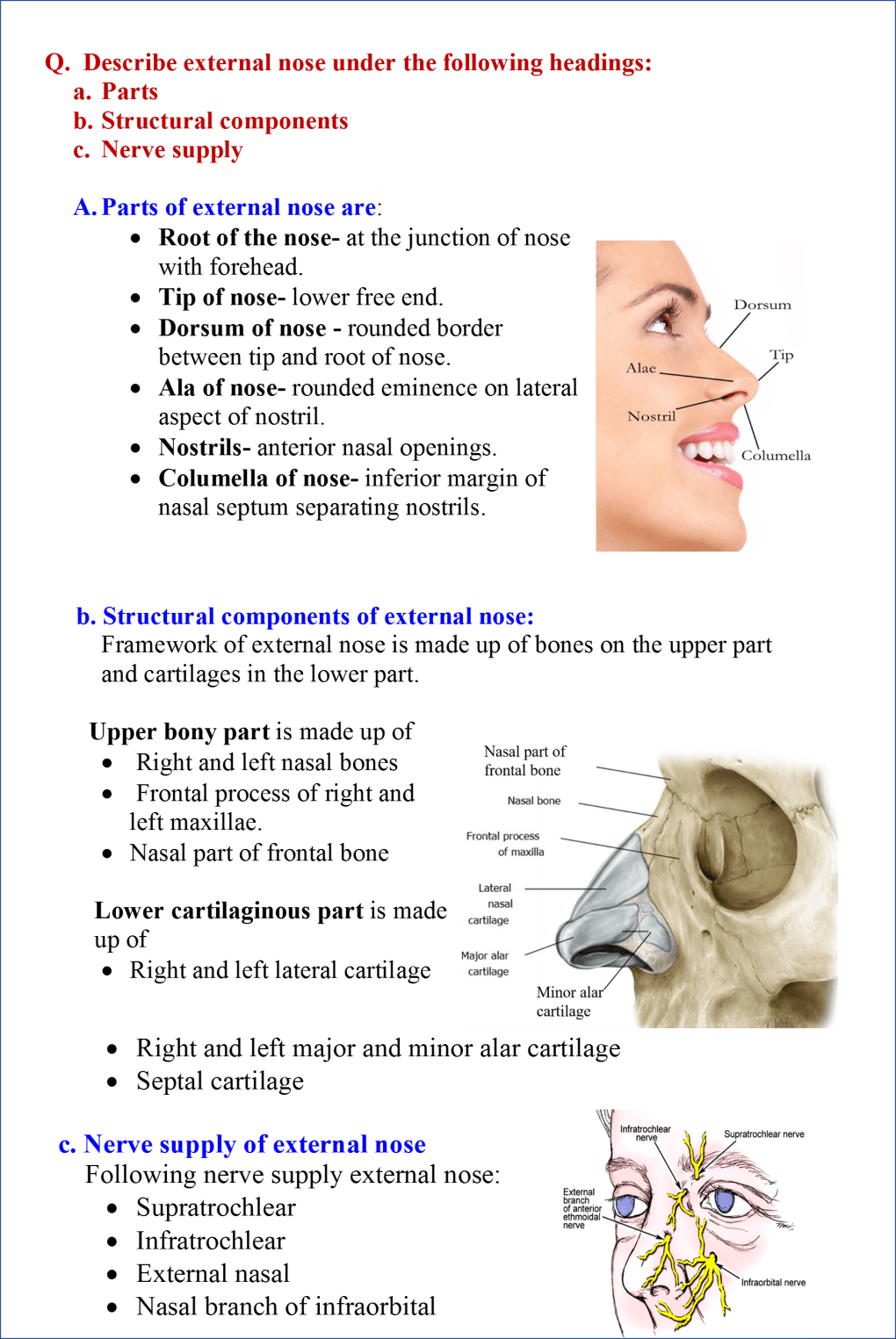 external nose -components and nerve supply