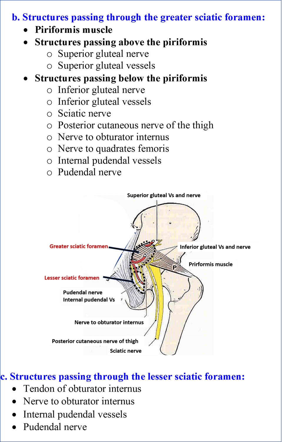 Structures passing through the greater and lesser sciatic notch