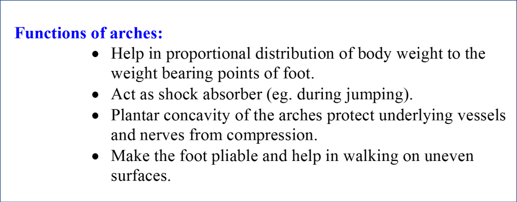 fuctions of arches of foot