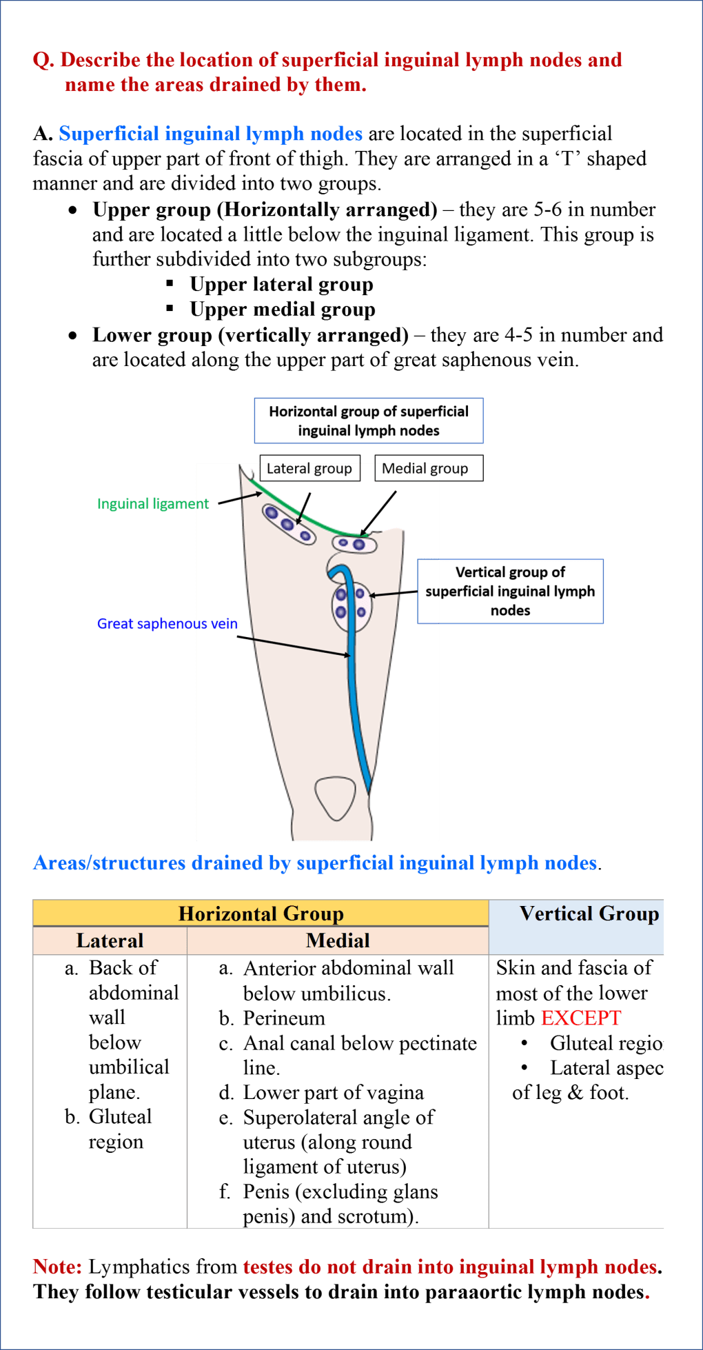 superficial inguinal lymph nodes and areas drained by them