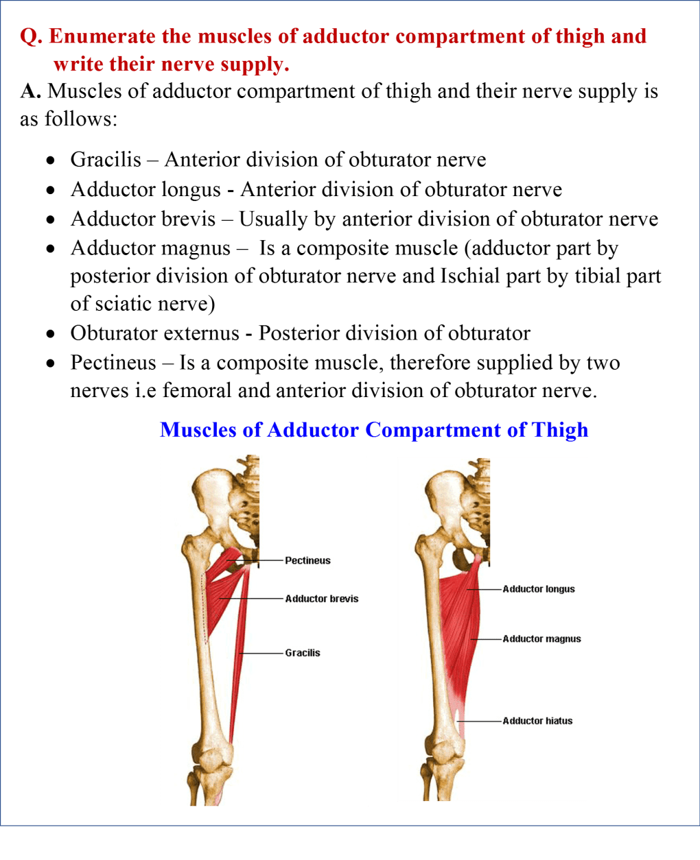 muscles of adductor compartment of thigh