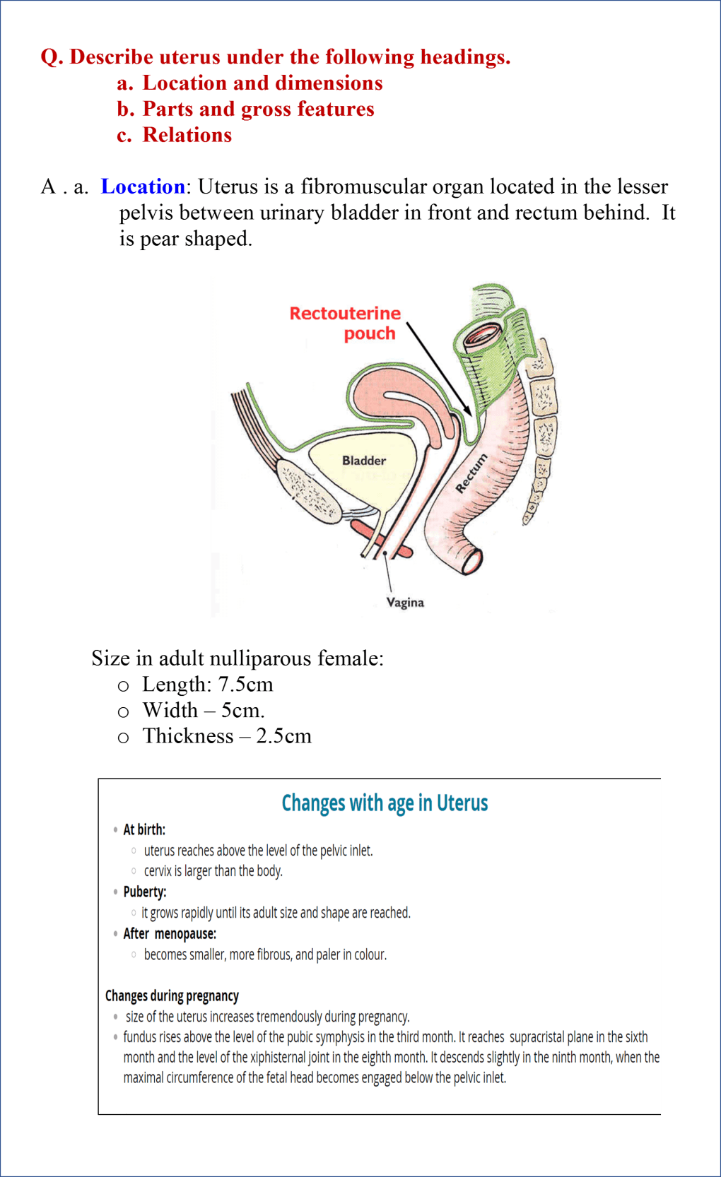 location and dimensions of uterus