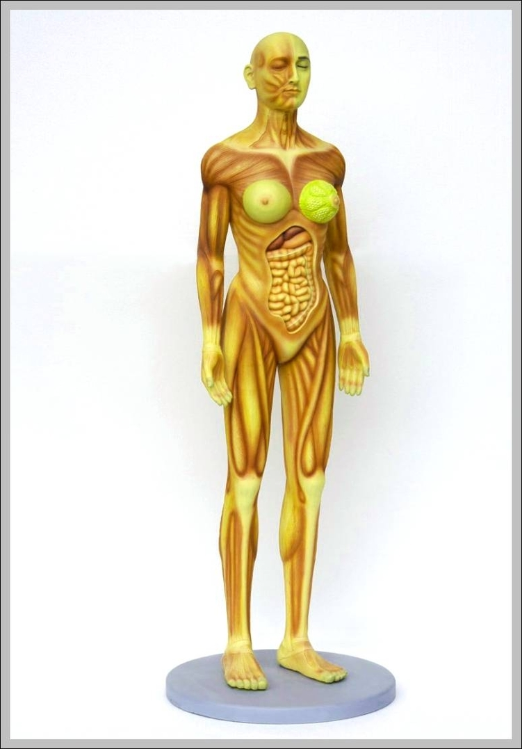medium resolution of female human anatomy 744 1116 diagram female human anatomy 744 1116 chart human anatomy diagrams and charts explained this diagram depicts female human