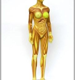 female human anatomy diagram female human anatomy chart human anatomy diagrams and charts explained this diagram depicts female human anatomy with  [ 805 x 1156 Pixel ]