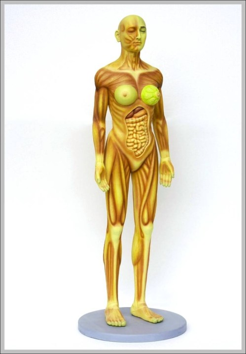 small resolution of female human anatomy diagram female human anatomy chart human anatomy diagrams and charts explained this diagram depicts female human anatomy with