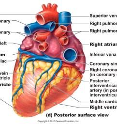 heart diagram [ 1024 x 768 Pixel ]