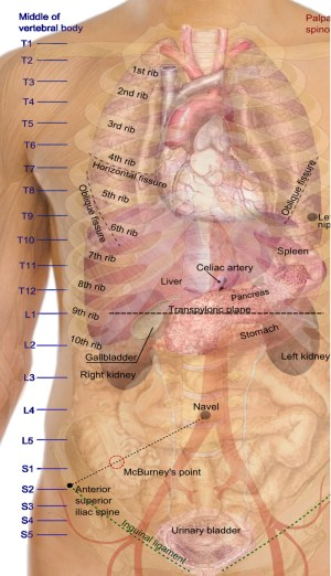 human body parts | Anatomy System  Human Body Anatomy diagram and chart images
