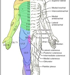 labeled muscle diagram 1024 1878 diagram labeled muscle diagram 1024 1878 chart human anatomy diagrams and charts explained  [ 1022 x 1794 Pixel ]