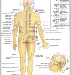lower back anatomy diagram 744 1125 [ 751 x 1086 Pixel ]