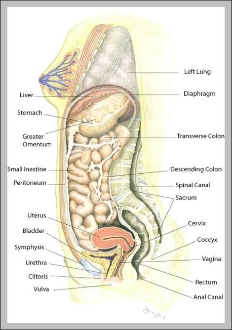 bones human skeleton diagram 98 honda civic ignition wiring uterus location | anatomy system - body and chart images