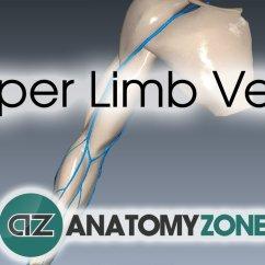 Lower Leg Nerve Diagram 2007 Ford F150 Ac Wiring Upper Limb Veins • Anatomyzone