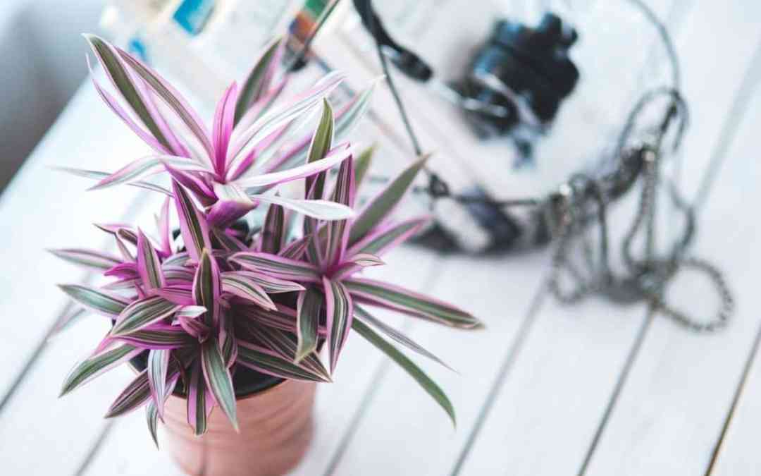 How to Choose the Right Potting Mix for Your New Houseplant!