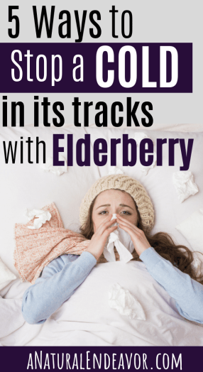 How to stop a cold with elderberry, elderberry cold care, sambucus