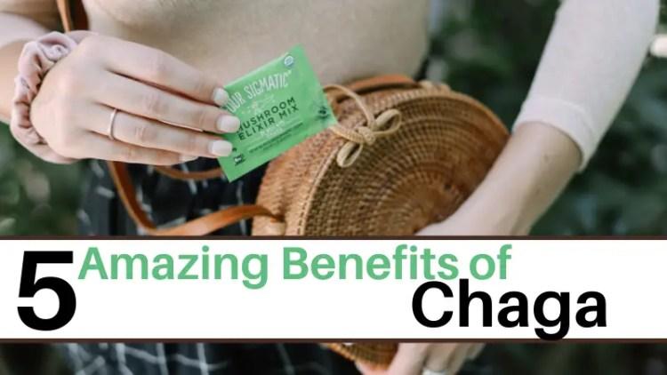 5 amazing benefits of Chaga Mushroom, adaptogens