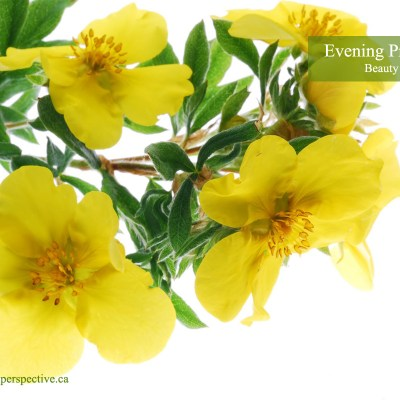 Beauty Recipes Using Evening Primrose Oil