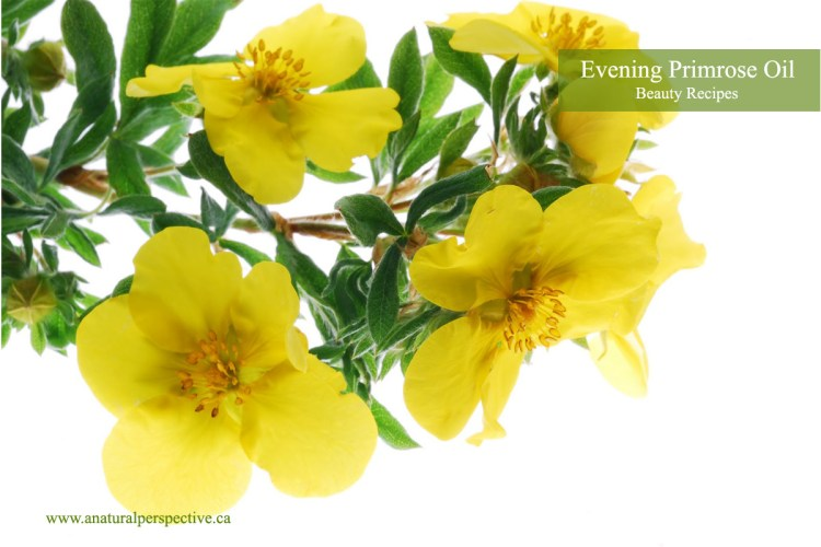 Acne Aging Body Scrubs with Evening Primrose Oil