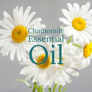 Chamomile Essential Oil - Anxiety-Stress