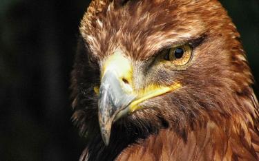 05-aigle-aigles-animaux.jpg