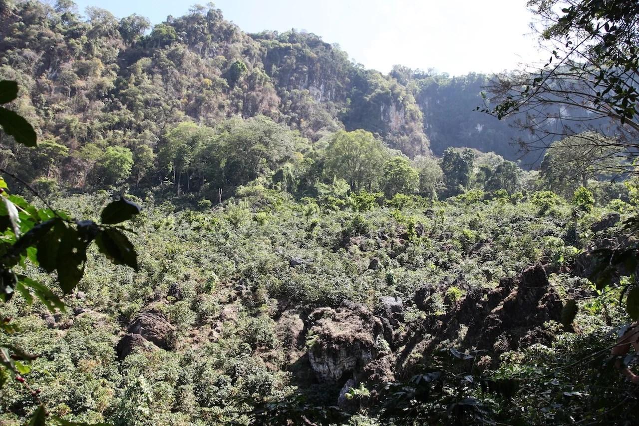 Anbassa artisan torréfacteur café Guatemala Huehuetenago plantation