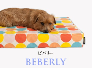 Banner-slide_beverly-RB