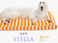 Banner-slide_stella-or