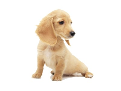Product_for-puppy