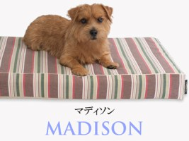 Banner-slide_madison-RB