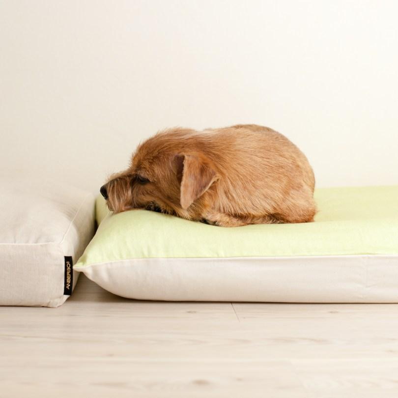 胃腸炎について 犬の洗える日本製ベッド:ロイヤルベッド - アンベルソ