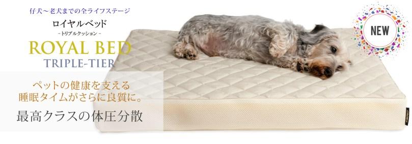 特集:愛犬のベッドの「見直しと購入」のタイミング