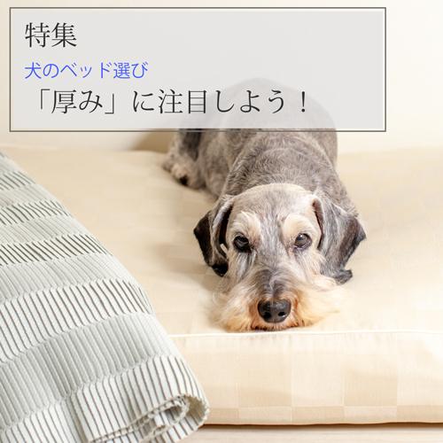 特集:犬用ベッド選びは「厚み」に注目しよう!