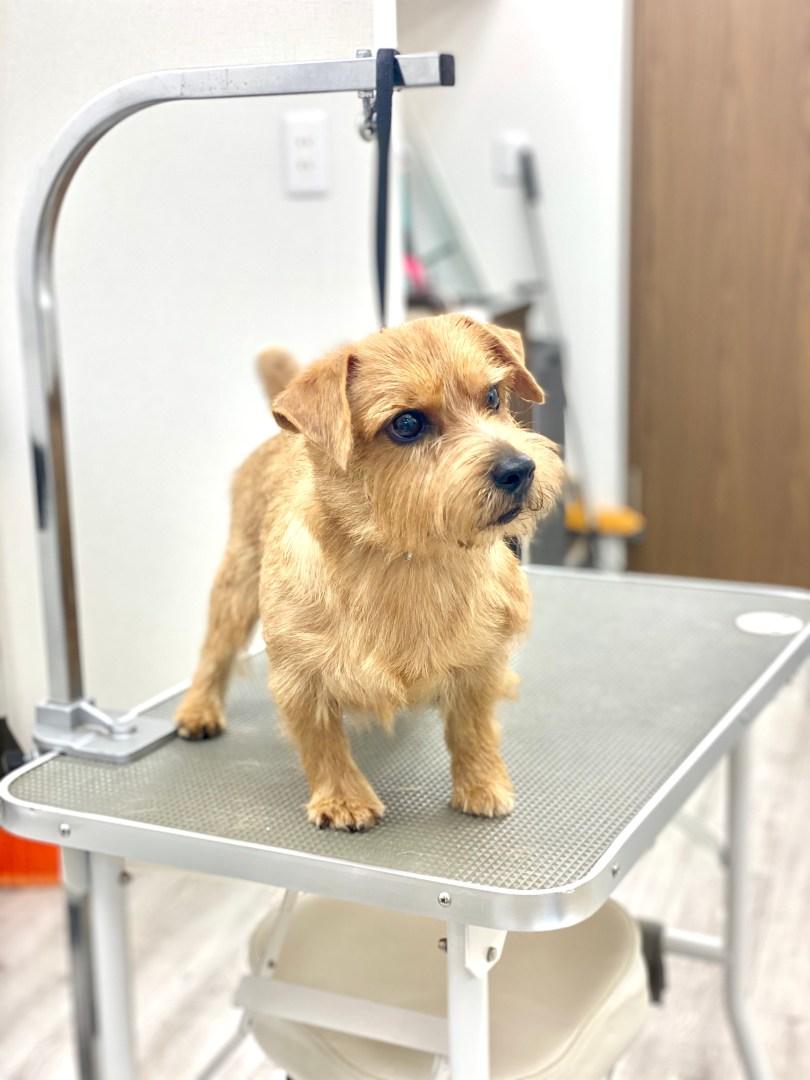 看板犬たちのお手入れ 犬の洗える日本製ベッド:ロイヤルベッド - アンベルソ